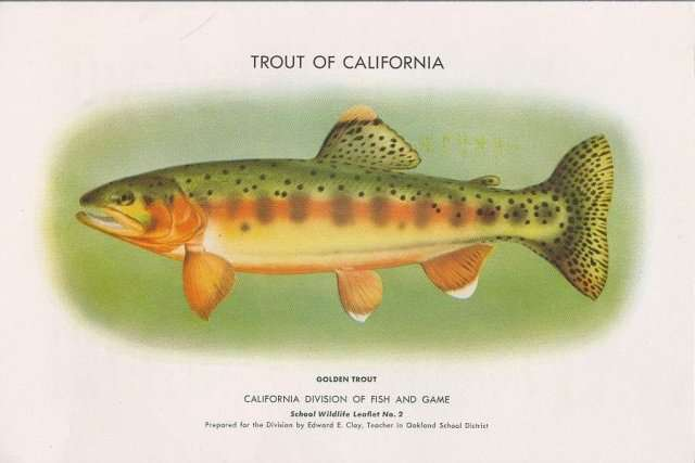 California state fish for California fish hatcheries